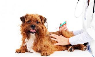 Câmara Municipal de Ovar promove Campanha de Vacinação Antirrábica