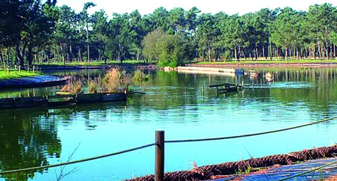 Parque Ambiental do Buçaquinho distinguido nos Green Project Awards 2016