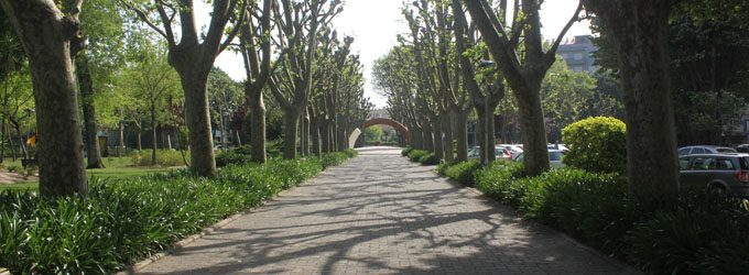 Requalificação do Largo Almeida Garrett vai custar 300 mil euros