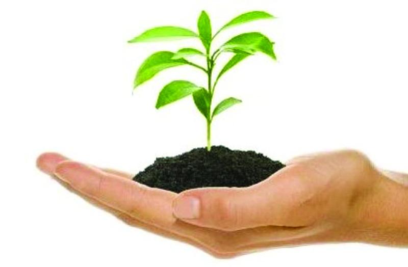 AdRA entrega 1150 árvores à Quercus