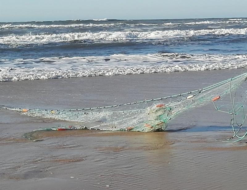 """PCP de Ovar contra o """"aumento brutal"""" do preço das licenças para a pesca com majoeira"""