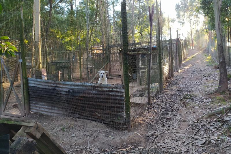 MARAnimais lança crowdfunding para albergar até 85 novos animais em situação de risco
