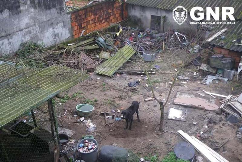 GNR de Ovar resgatou cão subnutrido e vítima de maus-tratos